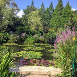 モネの庭02