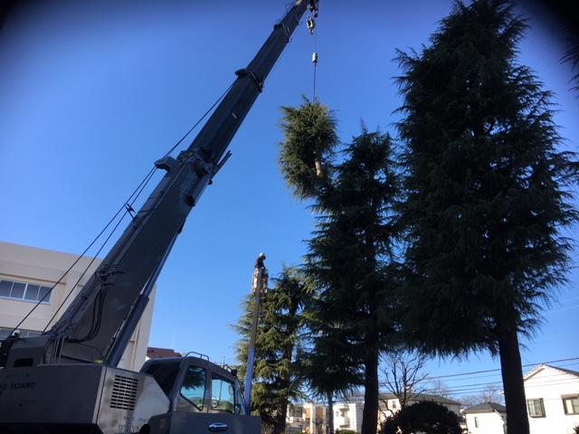 ラフター 樹木を吊る