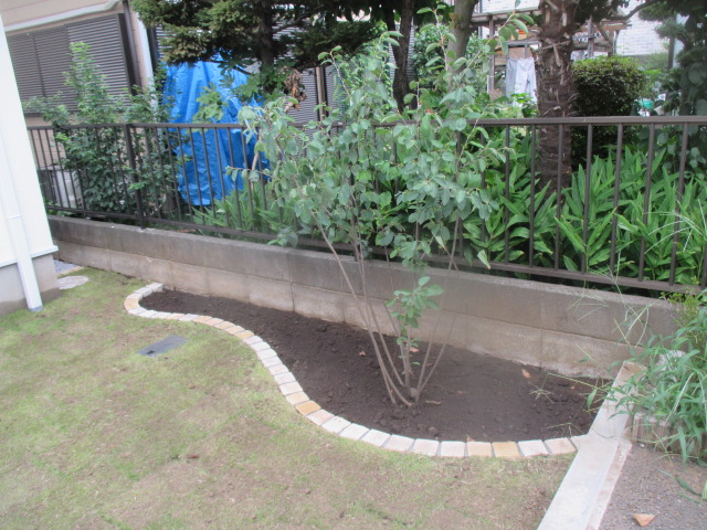 ピンコロ花壇