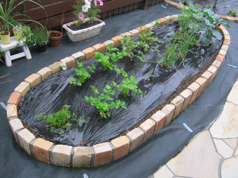 菜園スペース2